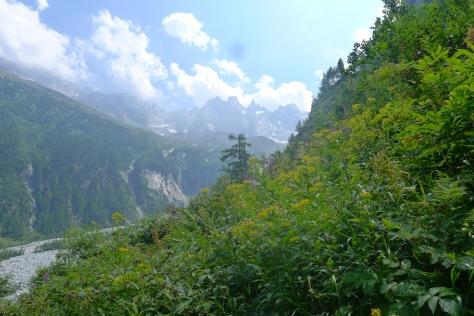 Back in the Swiss meadow